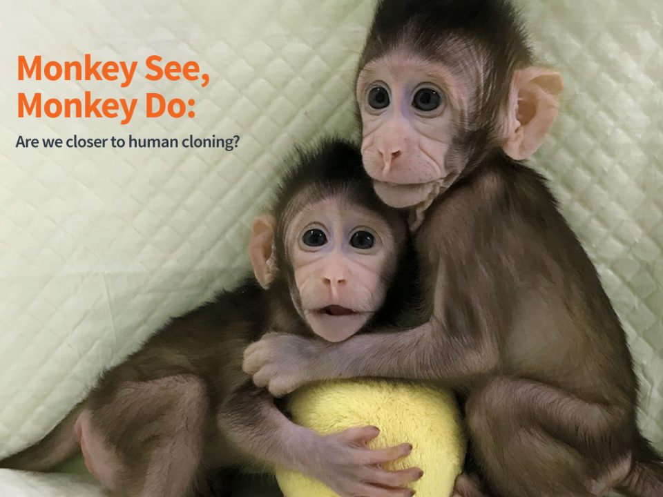 Monkey cloning and human cloning